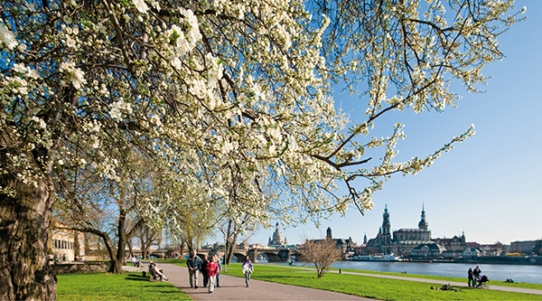 Elbe bank with flowering trees, in the background the silhouette of Dresden - Photo: Sylvio Dittrich, DMG