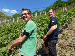 Viticulturists with a measuring unit on the upper arm