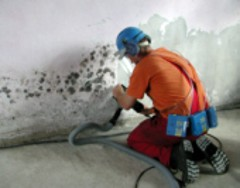 Removal of mouldy wall material