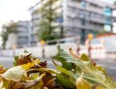 Bild eines Gebäudes, im Vordergrund herbstliche Blätter