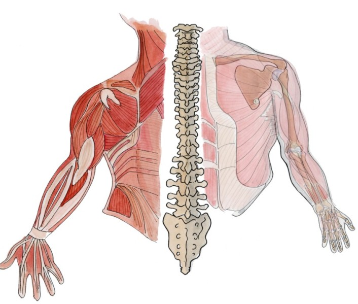 DGUV - Prävention - Themen A bis Z - Muskel-Skelett-System